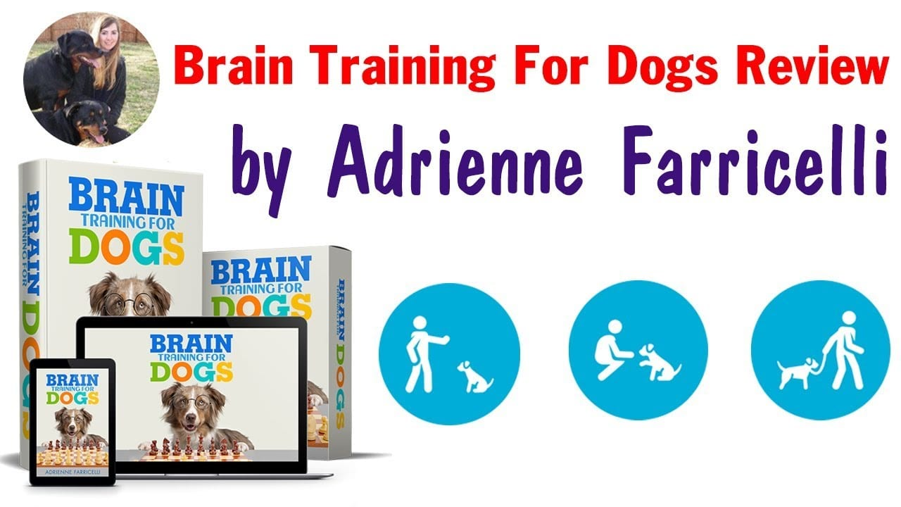 Brain Training For Dogs Review – Simple And Effective Brain Training!!!